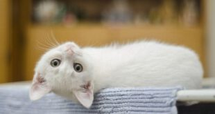 Cure Hiccups In Cats