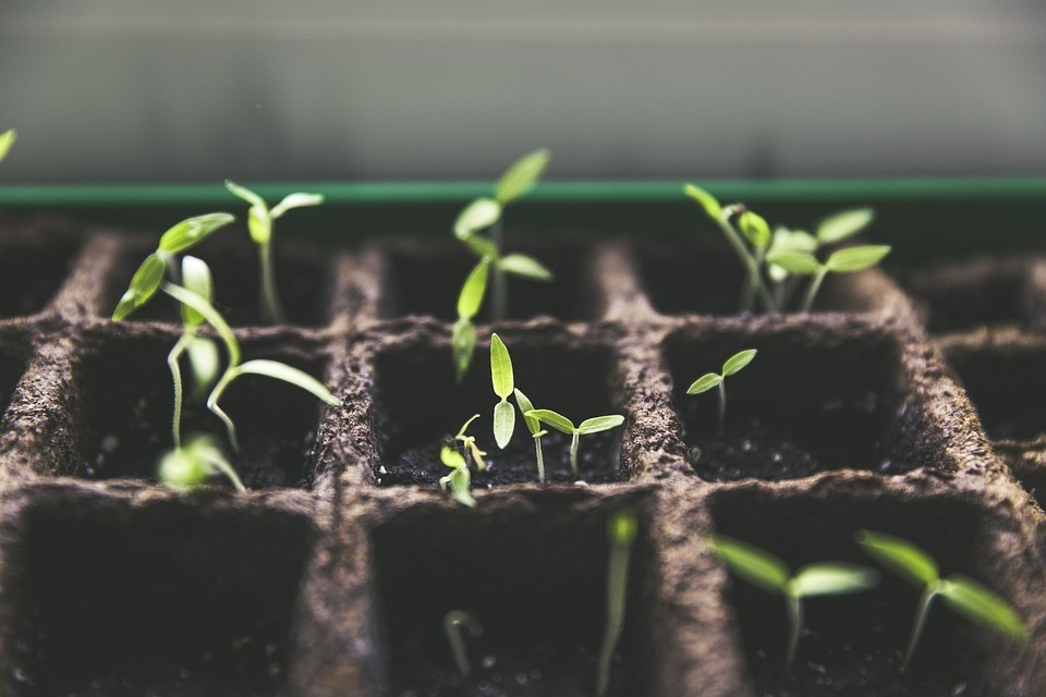 Grow Your Vegetables at Home